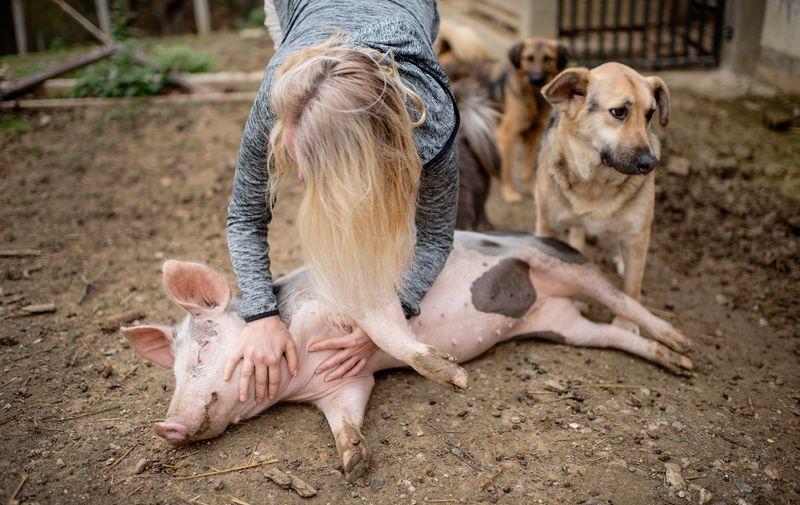 Agneza je ovu farmu kupila prije pet godina, s njom i Jelenom ovdje žive svinje, jedna krava, ovce, jarac, psi, mačke...
