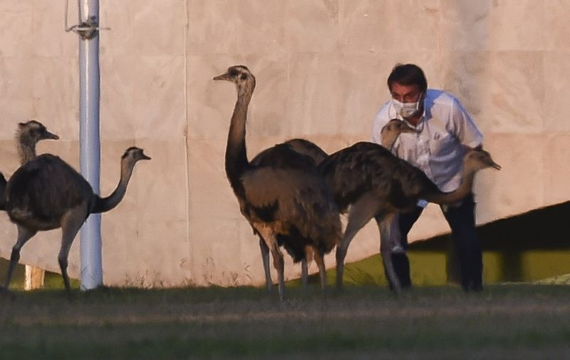 Brazilian President Jair Bolsonaro feeds emus outside the Alvorada Palace in Brasilia, Brazil, on July 13, 2020, in the midst of the new COVID-19 coronavirus pandemic. - Bolsonaro tested positive for the coronavirus on July 7, after months minimizing the dangers of the disease. (Photo by Sergio LIMA / AFP)