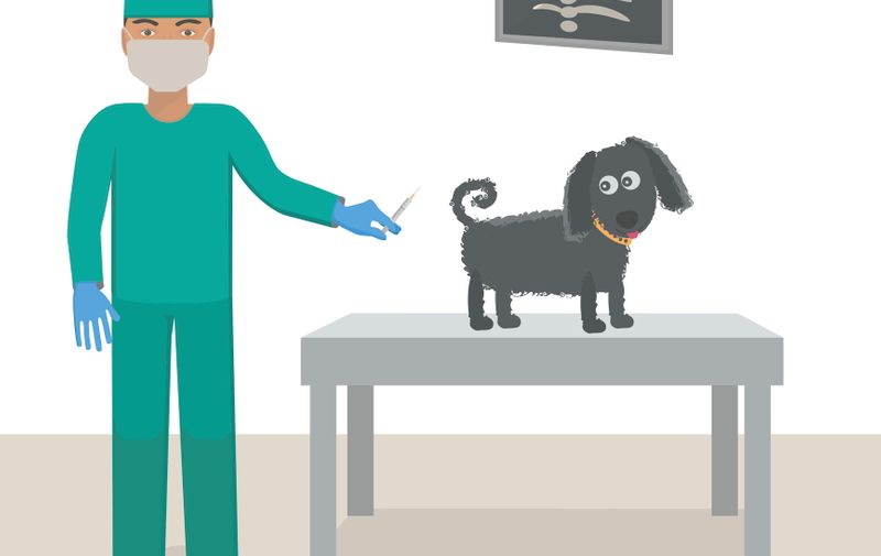 Veterinarian with a dog in a medical office. Vaccination for dogs. Vector illustration.