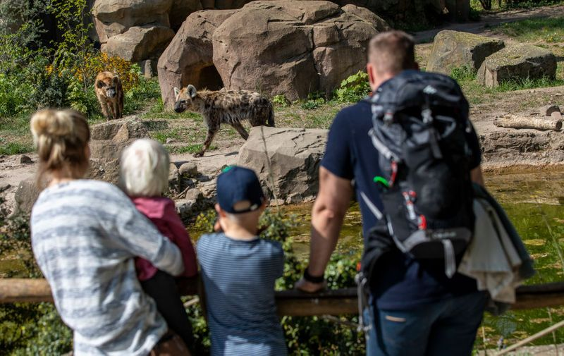 BERLIN, GERMANY - APRIL 28: Visitor watch Hyenas at the Zoo Tierpark on April 28, 2020 in Berlin, Germany. Zoos opened their doors again in Berlin, as the aquarium, animal houses and playgrounds will remain closed for the time being. (Photo by Maja Hitij/Getty Images)