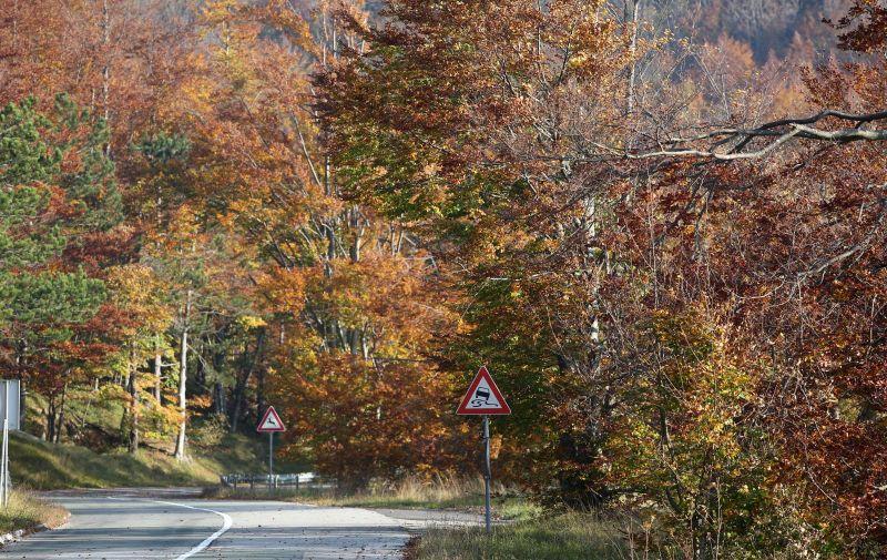 Boje jeseni u šumama Gorskog kotara 13.10.2018., Gornje Jelenje - Boje jeseni u sumi Gorskog kotara.  Photo: Goran Kovacic/PIXSELL