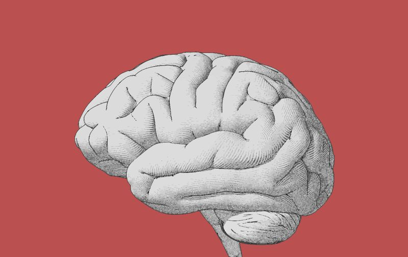 Engraving brain side view with soft drawing illustration on red background