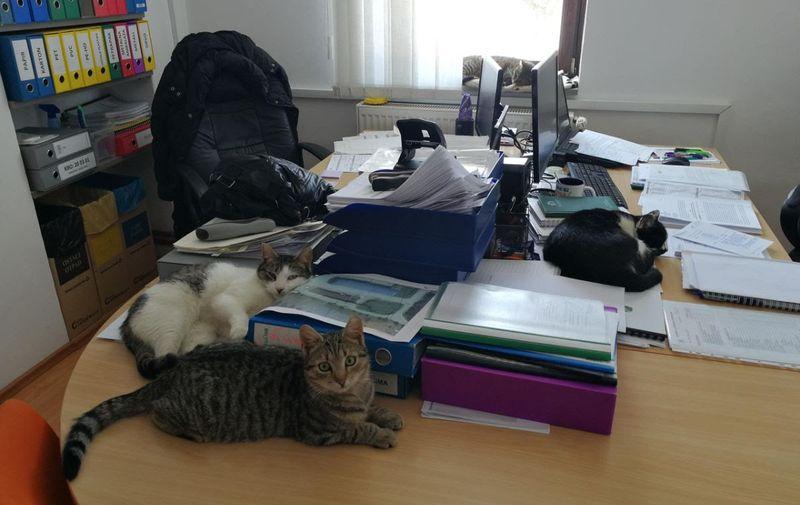 Na prozoru spava Dubioza, na stolu desno Fenix, lijevo Flika i Viski