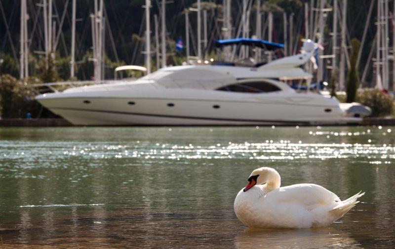 18.10.2010., Marina, Dubrovnik - Kontrast dubrovacke marine, labudovi s jedne, jahte s druge strane obale. Photo: Grgo Jelavic/PIXSELL