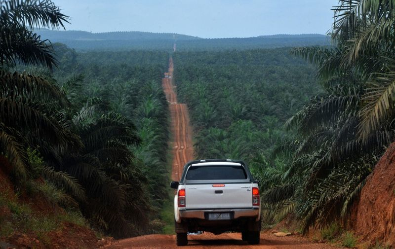 This photograph taken on February 23, 2014 during a ground survey mission by Greenpeace at East Kotawaringin district in Central Kalimantan province on Indonesia's Borneo island, shows a palm oil plantation located in the concession of Karya Makmur Abadi. Environmental group Greenpeace on February 26 accused US consumer goods giant Procter & Gamble of responsibility for the destruction of Indonesian rainforests and the habitat of endangered orangutans and tigers. AFP PHOTO / Bay ISMOYO (Photo by BAY ISMOYO / AFP)