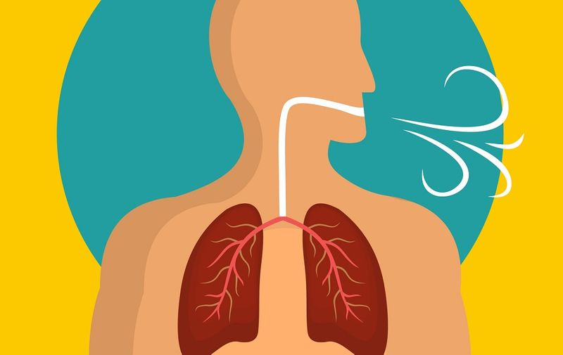Breathing lungs icon. Flat illustration of breathing lungs vector icon for web design