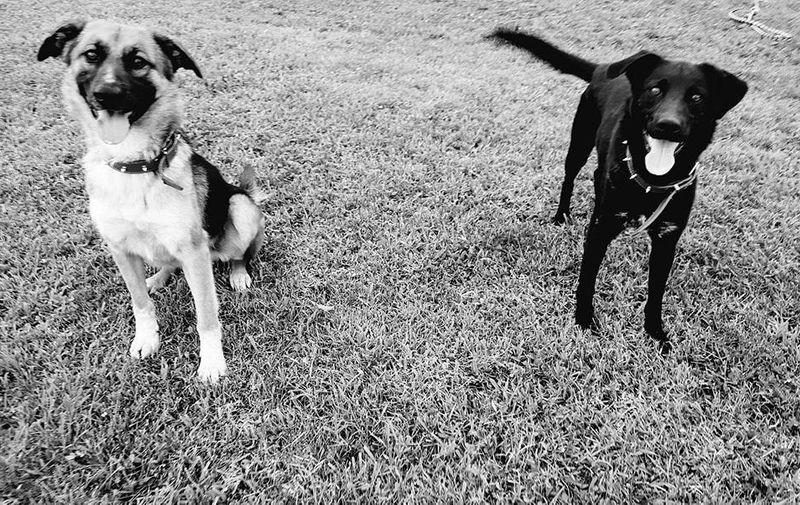 Dva nerazdvojna psa koji će sve napraviti jedan za drugoga